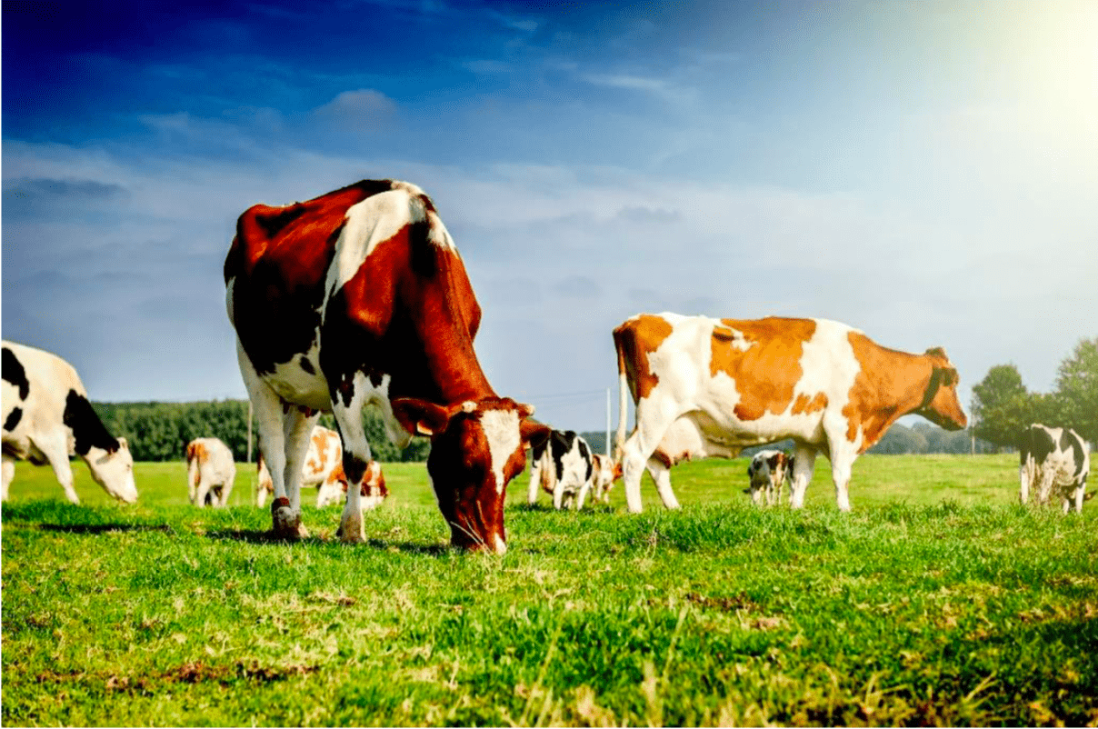 U.S. Dairy Industry 2019: Challenges and Opportunities
